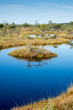 Piękny spokojny krajobraz pogodny bagna jezioro zdjęcia royalty free