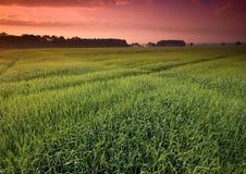piękny spokojny wschód słońca zdjęcie royalty free