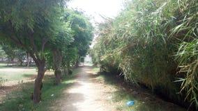 Piękny sposób przechodzi między drzewami Fotografia Stock