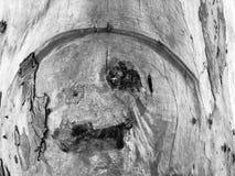 Piękny stary drzewo w parku Tekstury tła zakończenie w górę widoku Obraz Stock