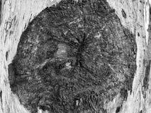 Piękny stary drzewo w parku Tekstury tła zakończenie w górę widoku Zdjęcia Stock