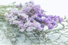 Piękny statice kwiatu bukiet na białym tle Fotografia Royalty Free