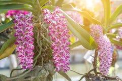 Piękny storczykowy kwiatu i zieleni liści tło zdjęcia stock