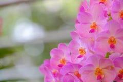 Piękny storczykowy kwiatu i zieleni liści tło w Garde obrazy stock