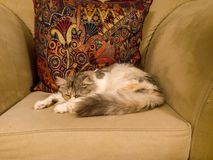 Piękny strzał śliczny biały kota dosypianie na kanapie fotografia royalty free