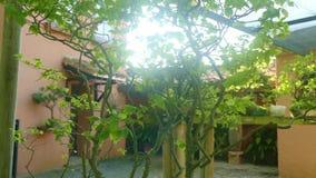 Piękny sunlighted hiszpański Hiszpański podwórze z mnóstwo zielonymi drzewami zbiory