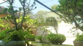 Piękny sunlighted hiszpański Hiszpański podwórze z mnóstwo zielonymi drzewami zdjęcie wideo