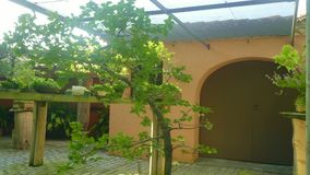 Piękny sunlighted hiszpański Hiszpański podwórze z mnóstwo zielonymi drzewami zbiory wideo