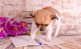 Piękny szczeniak egzamininuje na notatniku zdjęcia stock