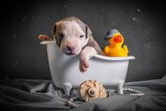 Piękny szczeniak kąpać się w łazience zdjęcia royalty free