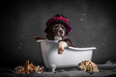 Piękny szczeniak kąpać się w łazience fotografia stock