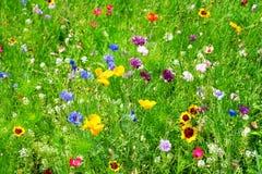 Dzicy kwiaty Obrazy Royalty Free
