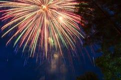 Piękny tło z fajerwerkami na niebieskim niebie i sylwetki drzewa, obraz royalty free