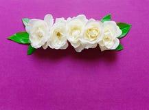 Piękny tło z przygotowania białe róże kwitnie zdjęcie royalty free