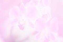 Piękny tło z Storczykowym kwiatem w menchia koloru temacie Obraz Stock