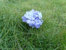 Piękny tło z trawy, kwiatów najlepszy tłem dla i obraz stock