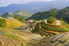 Piękny tarasowaty ryżu pole w Hoang Su Phi w Wietnam Obraz Stock