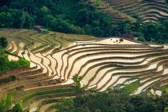 Piękny tarasowaty ryżu pole w Hoang Su Phi w Wietnam Obrazy Royalty Free