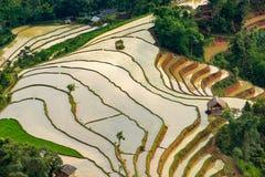 Piękny tarasowaty ryżu pole w Hoang Su Phi w Wietnam Obraz Royalty Free