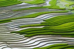 Piękny tarasowaty ryżu pole w Mu Cang Chai, Wietnam Zdjęcie Royalty Free