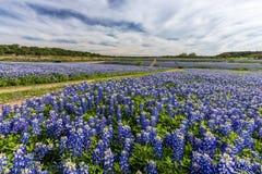 Piękny Teksas bluebonnet pole przy Muleshoe chyłu odtwarzaniem Jest zdjęcie royalty free