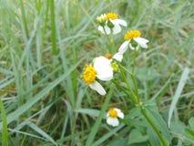 Piękny trawa kwiat w tropikalnym ogródzie zdjęcia stock