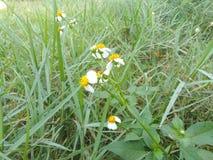 Piękny trawa kwiat w tropikalnym ogródzie zdjęcie royalty free
