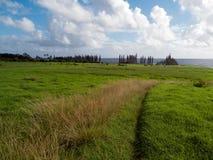 Piękny trawy dorośnięcie w Maui Hawaje Obrazy Stock