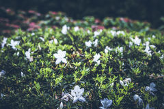 Piękny tropikalny kwiatu tło na Bali wyspie, Indonezja Zamyka kwiat kwiaty Fotografia Stock