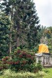 Piękny tropikalny kwiatu tło na Bali wyspie, Indonezja Zamyka kwiat kwiaty Zdjęcie Royalty Free