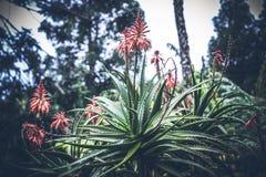 Piękny tropikalny kwiatu tło na Bali wyspie, Indonezja Zamyka kwiat kwiaty Zdjęcia Royalty Free