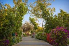 Piękny tropikalny park z kwiatonośnymi krzakami i alejami Obraz Royalty Free