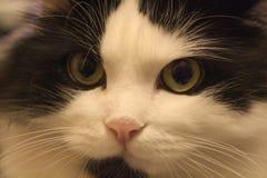 piękny twarzy zaciszności widok Fotografia Stock