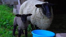 Piękny uroczy prześcieradło w rolnym domu z matką zbiory wideo