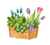 Piękny wczesny wiosna ogród kwitnie bukiet w drewnianym pudełku, ręka rysująca akwareli ilustracja ilustracji
