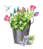 Piękny wczesny wiosna ogród kwitnie bukiet w wiadrze ilustracja wektor