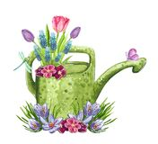 Piękny wczesny wiosna ogród kwitnie bukiet w zielonej podlewanie puszce ilustracji