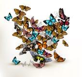 Piękny wektorowy serce od mnóstwo realistycznego kolorowego butterfl Fotografia Royalty Free