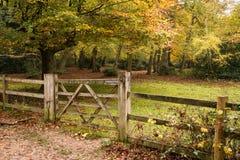 Piękny wibrujący jesień spadek barwi w lasu krajobrazie Zdjęcie Royalty Free