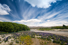 Kwiatu ogród, Południowa wyspa, Nowa Zelandia Zdjęcia Stock