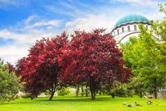 Piękny widok świątynia St Sava w Belgrade, Serbia Obraz Royalty Free
