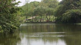 Piękny widok jezioro Daan lasu park w Taipei kapitale Tajwan, zdjęcie wideo