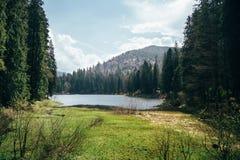 Piękny widok na halnym jeziorze otaczającym zielonym jedlinowym lasem w malowniczym lato krajobrazie Zdjęcia Stock