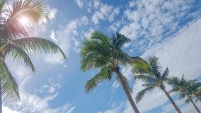 Piękny widok niebo między plażowymi drzewkami palmowymi zdjęcia stock
