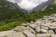Piękny widok od halnego śladu Ostrva Tatrzańska góra Zdjęcia Stock