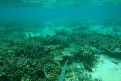 Piękny widok podwodny świat z nieżywymi rafami koralowa Błękitne wody i biały piaska dno _ obrazy royalty free