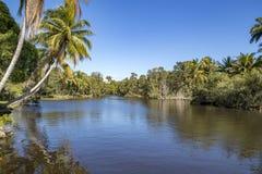 Piękny widok rzeka i palmy zdjęcia royalty free