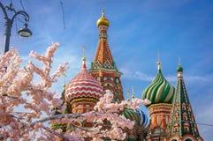 Piękny widok St basilu ` s katedra Kwiat Sakura w Moskwa grodowa cesky dziedzictwa krumlov sezonu wiosna przeglądać świat Rosja K Zdjęcie Royalty Free