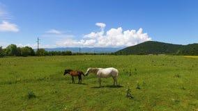 Piękny widok z lotu ptaka konie pasa w zielonej dolinie, uprawia ziemię biznes zbiory