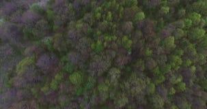 Piękny widok z wierzchu jesień lasu drzewa jest blisko siebie panorama pi?kna Kąta obiektyw zdjęcie wideo